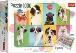 Kutyák kollázs 1000 db-os pullze + puzzlerendező Trefl